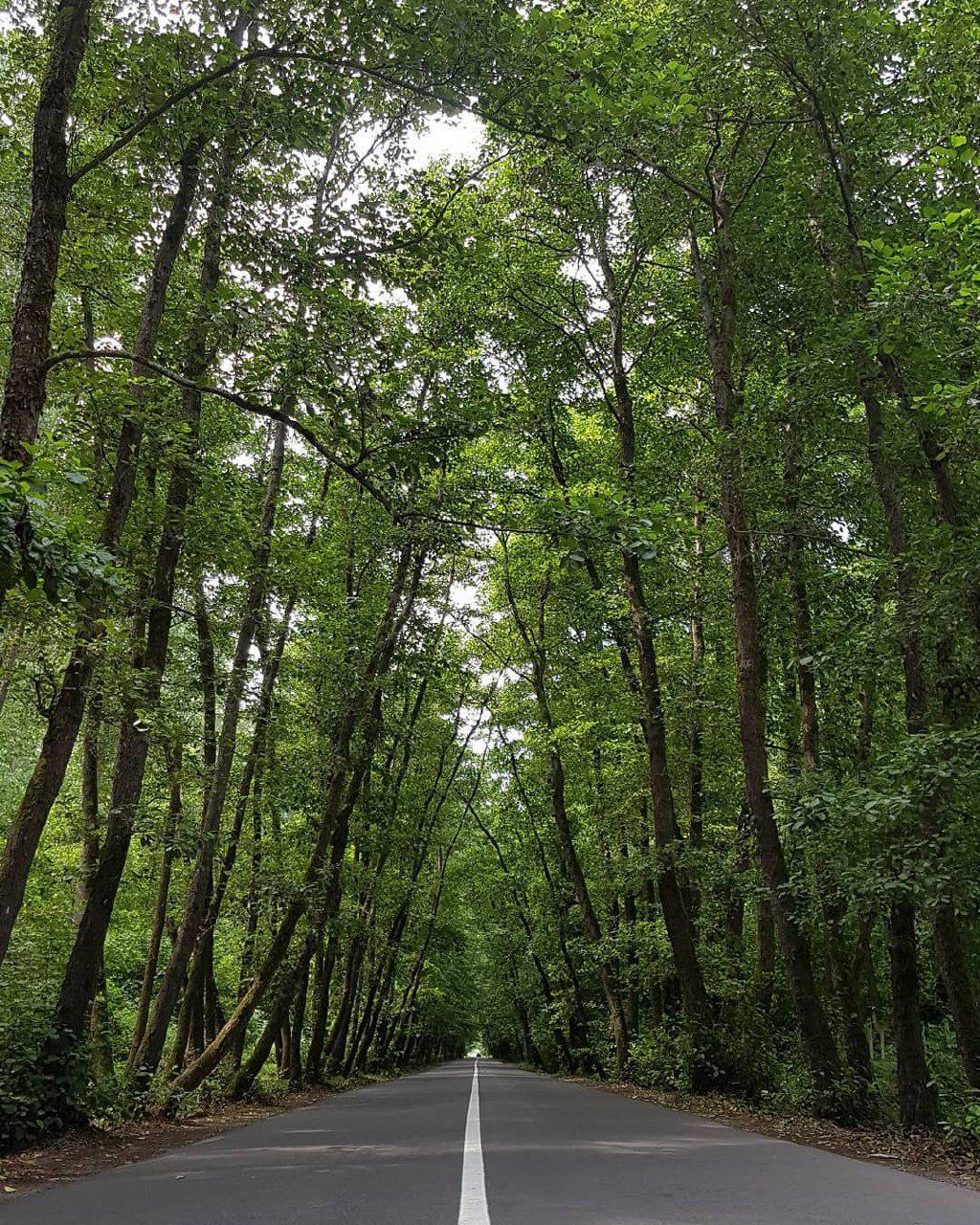 تونل جنگلی روستای سرسبز صفرابسته ی گیلان