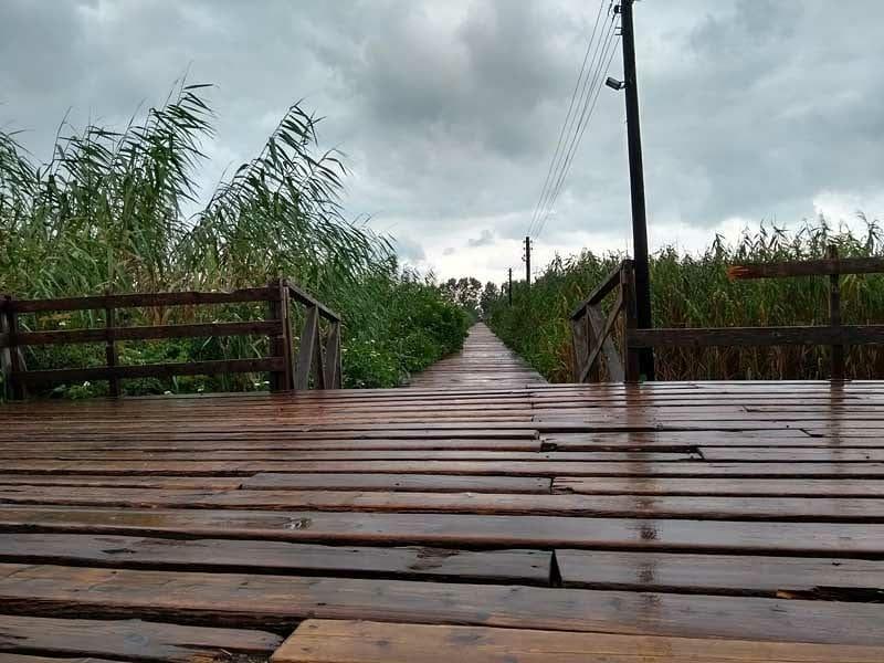 پل چوبی کیاشهر