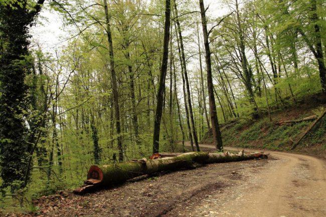 جنگل-توسکا-چشمه