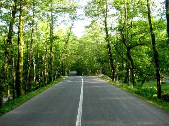 جنگل سه هزار