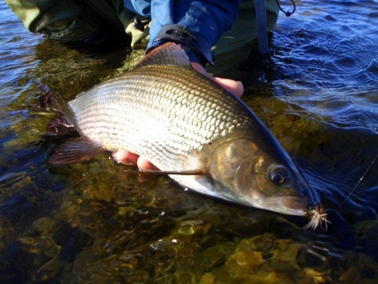 ماهیگیری در گیلان
