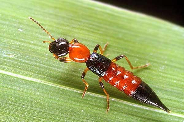 حشرات شمال
