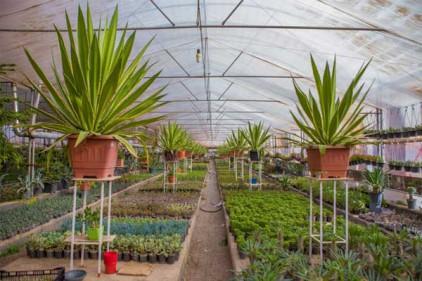 خرید زمین مناسب گلخانه در شمال
